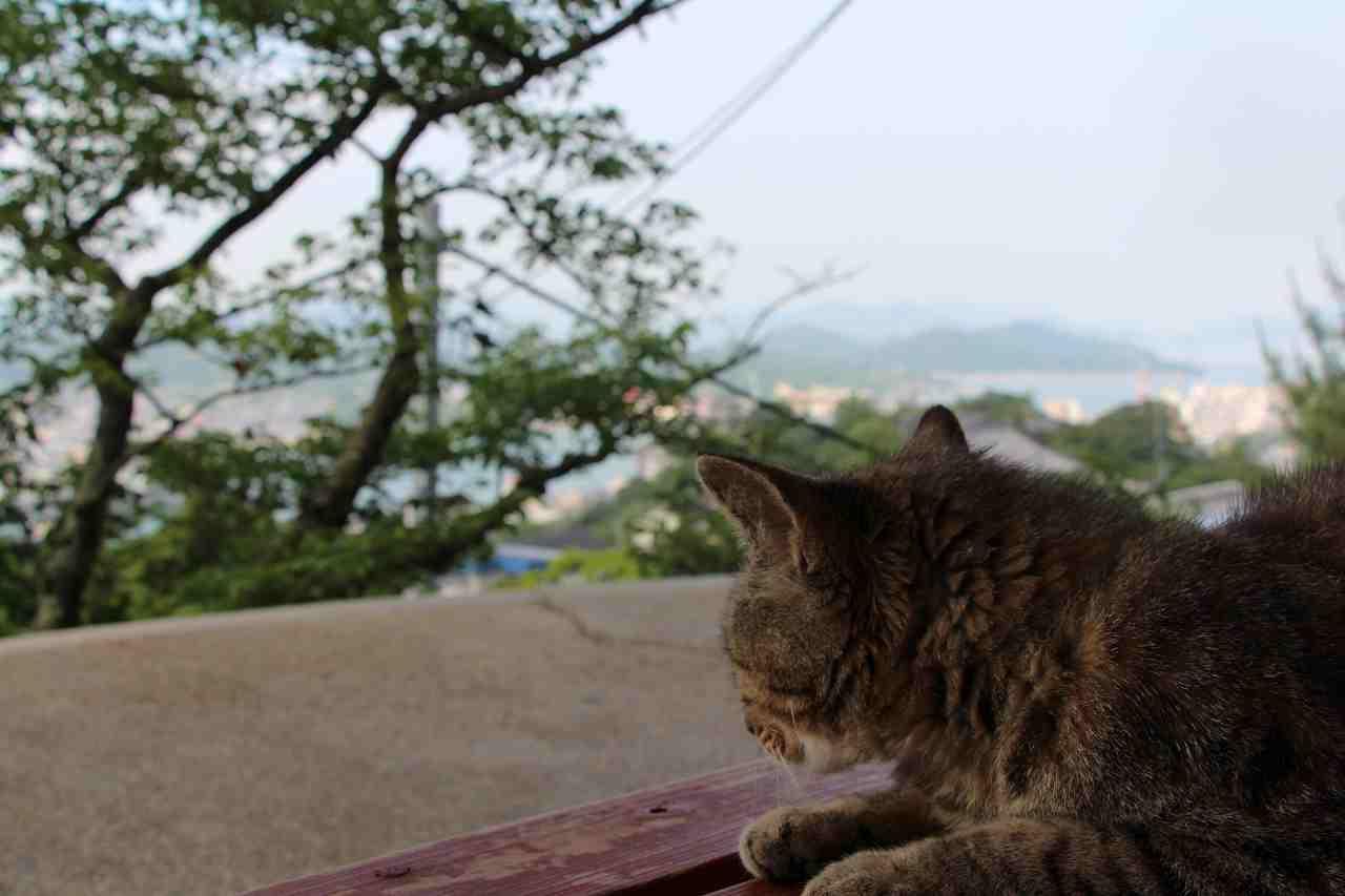 尾道観光ではよく猫に出合います