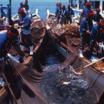 福山、鞆の浦の鯛網